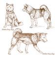 shiba iny dog vector image
