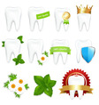 tooths set vector image vector image
