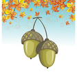 Autumn card with acorns vector image vector image