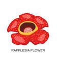 corpse flower rafflesia arnoldii malaysian symbol vector image vector image