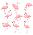 pink flamingo cartoon vector image