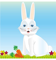 Rabbit background with grass flowers and carrots vector image