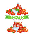 red tomato with sauce vector image vector image
