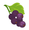 currant berry on branch vector image