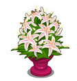 bouquet of pink flowers in vase isolated vector image vector image