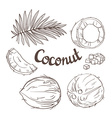coconut set - whole nut leaves a coco segment vector image
