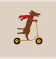 funny dachshund dog riding scooter vector image vector image