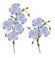 Twigs with flowers of flax vector image vector image