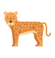 wild leopard isolated icon vector image vector image