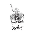 orchid isolated vintage tropical flower vector image