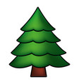 pine tree on white background vector image vector image