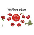 poppy flower red poppies isolated on white vector image vector image