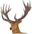 A male deer vector image