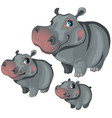 cartoon hippo on white background animals vector image vector image