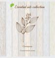 cinnamon essential oil label aromatic plant vector image vector image