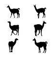 collection guanaco silhouettes vector image