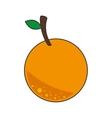 orange citrus fruit vector image