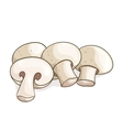 white champignon mushrooms vector image