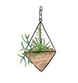 glass geometric hanging florarium in modern vector image vector image