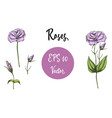 set of pink roses isolated vector image vector image