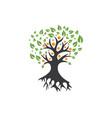 family tree logo template vector image