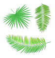 palm branch set long round leaves with sharp edges vector image vector image