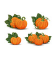 pumpkins with leaves isolated on white background vector image