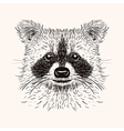 Sketch liner raccoon Hand drawn in doodle style vector image vector image