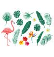 Tropical leaves flowers set