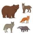 wild forest animals fox badger lynx bear icons vector image vector image