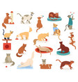 cartoon cats cute kitten characters funny fluffy vector image