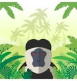 Colobus on the Jungle Background