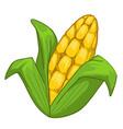 corn crops sweet maze product grain vegetable vector image vector image