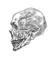 sketch of profile human skull hand drawing vector image