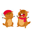 cartoon groundhog vector image