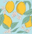 lemon background hand-drawn fruit pattern vector image vector image
