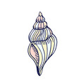 sea shell hand drawn icon or vector image