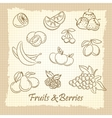 Hand drawn fruits and berries vector image