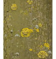 Tree bark with lichens texture vector image vector image