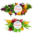 fruit and berry food labels vector image vector image