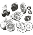 Hand drawn collection of fruits sketch vector image vector image