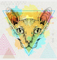 hipster realistic animal sphynx cat vector image vector image
