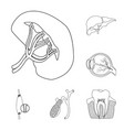 isolated object body and human icon set of vector image vector image