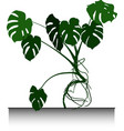 large palm monstera vector image