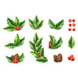 realistic merry christmas holly leaves fir vector image vector image