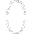 teeth set vector image vector image