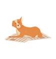 flat homeless dog vector image vector image