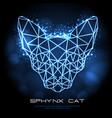 neon shpynx cat polygon silhouette vector image