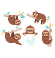 set of joyful sloth sitting on a branch vector image