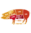 cuts of pork - meat diagrams vector image